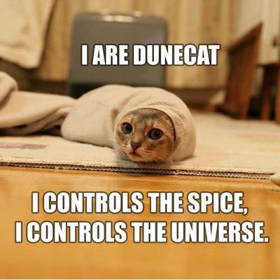 Cat-dunecat-lg