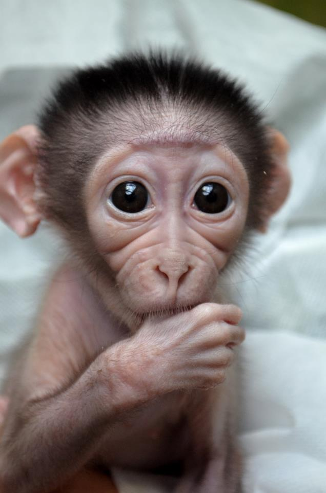 Cute monkeys live!